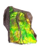 Vente en ligne d'Ammolite du Canada - Du Minéral au Bijou
