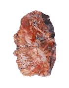 Bois fossile, groupe des Quartz minéraux de Madagascar
