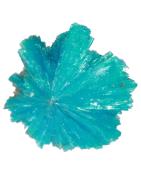 Minéraux en forme de rose de Cavansite, amas de micro-cristaux
